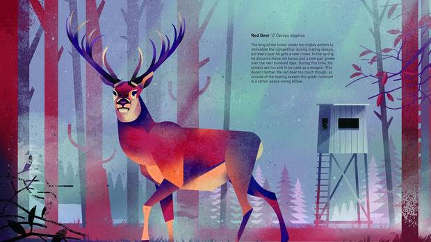 From Dieter Braun's Wild Animals of the North.