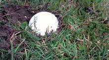 Golf ball in the mud