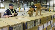 A border officer watches his dog sniff through shipping boxes at a Canada Border Services Agency warehouse in Montreal on April 21, 2009. (Paul Chiasson/Paul Chiasson/The Canadian Press)