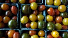 Mini tomatoes at Carron Farms, in Bradford, Ontario. (Sheryl Nadler/Sheryl Nadler/The Globe and Mail)