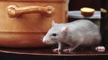 Nobody likes to share their vacation spot with rats. (Thinkstock)