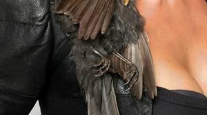The materials list for Australian designer Julia deVille's Bird Shoulder Piece includes sapphires, gold leaf, leather and starling.