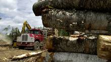 A file photo shows logging near Hwy 17 (Globe and Mail/Patti Gower/Globe and Mail/Patti Gower)