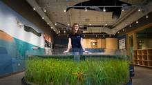 Charlotte Hodges, 16, volunteers in the Wet Lab programs at the Vancouver Aquarium Marine Science Centre. (DARRYL DYCK For The Globe and Mail)