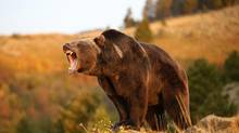 Investors should brace for a bear market for bonds. (Dennis Donohue/Getty Images/iStockphoto)