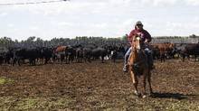 Thanks to a loan from the Indian Business Corporation, Lou Ann Solway was able to open a ranching business on Alberta's Siksika Nation reserve. (Trevor Solway)