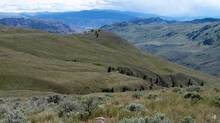 Part of the Sage and Sparrow Conservation Area near Osoyoos, B.C., is shown in a handout photo. A non-profit conservation group has bought a huge tract of private land in southern British Columbia to preserve the province's disappearing grasslands. (Nature Conservancy of Canada/THE CANADIAN PRESS)