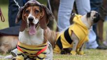 Pet humanists are 'the dream market of any pet-product manufacturer. (John Vizcaino/Reuters)