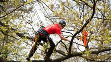 Tree climber Krista Strating is seen during the 2013 North American tree climbing competition in Newark, NJ. (Megan Strating/Megan Strating Photography)