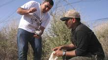 Members of the Palestine Wildlife Society take part in a bird tagging project. (Imad Atrash)