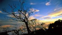 Thank tourism for the creation of national parks in Borneo, such as Kinabalu National Park. (Bruce Kirkby/Bruce Kirkby)