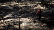 A firefighter puts out hot spots in Peachland, B.C., on Sept. 11, 2012 after a wildfire moved through the area. (DARRYL DYCK/THE CANADIAN PRESS)