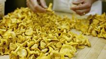 Keith Froggett, Chef at Scaramouche Restaurant, prepares some Chanterelle mushrooms. (Ryan Carter / The Globe and Mail/Ryan Carter / The Globe and Mail)