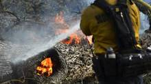 Firefighters extinguish a fire burning in a downed tree on the approach to Taylor Mountain a day after the Junction fire swept across Highway 41 in Oakhurst, Calif. on Tuesday, Aug. 19, 2014. (Eric Paul Zamora/AP)