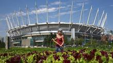 Sole Food Street Farms has grown food in an empty parking lot on the former Expo site beside BC Place in Vancouver. (Jeff Vinnick/The Globe and Mail)