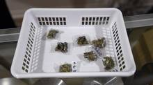 Tilray says it halted its bid after Health Canada subsequently issued a list of alternative fungicides that the company now uses. (Fred Lum/The Globe and Mail)