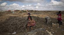 Syrian refugee girls collects wood to be used for heating at an informal tented settlement near the Syrian border on the outskirts of Mafraq, Jordan, Saturday, Jan. 23, 2016. (AP Photo/Muhammed Muheisen)