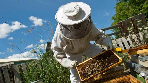 Master beekeeper Eugene Roman examines a frame from a hive at Rosewood Estates's 21st Vineyard and Honey Processing Location in Jordan, Ontario, July 25, 2012.
