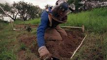A former rebel soldier clears land mines in Hnadane, Mozambique, in 2001. The United States announced at a conference in Mozambique on June 27, 2014, that it would no longer produce or acquire anti-personnel land mines. (THEMBA HADEBE/ASSOCIATED PRESS)