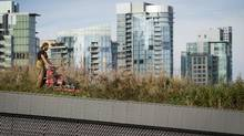 If cities like Edmonton are tainted by their economic link to Alberta's oil sands, Vancouver is equally so in its addiction to toxic Chinese wealth. (John Lehmann/The Globe and Mail)