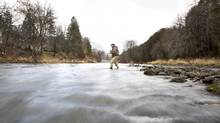Rob Heal, a co-owner of the Grand River Outfitting and Fly Shop, casts into the Grand River in Fergus earlier this month (Peter Power for The Globe and Mail)