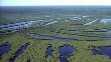 Alberta's Wood Buffalo National Park is designated as a UNESCO World Heritage Site because it has the world's largest freshwater delta.