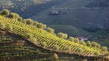 Vineyard in Portugal's Douro Valley. (Luis Pedrosa/Thinkstock)