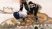 Manitoba Moose face St. John's Maple Leafs (JOE BRYKSA)