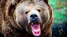The danger of a bear market. (www.corbis.com)