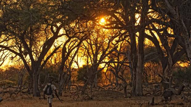 A sunset walk in Zimbabwe.