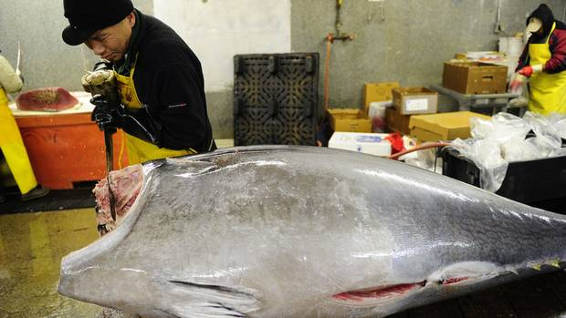 Mediterranean overfishing threatens global supply of for Fish market jersey city