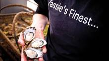 Bruny Island Oysters. (Rob Burnett/Tourism Tasmania)