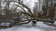 A pedestrian walks under a tree blocking Wellesley Street East after an ice storm in Toronto on Dec. 23, 2013. (Matthew Sherwood/THE CANADIAN PRESS)
