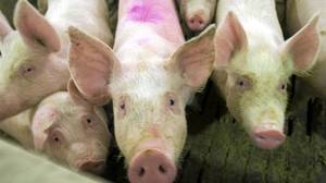 The price of pork bellies, used to make bacon, has skyrocketed