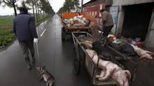 Workers collect dead pigs to deliver to a bio-safety disposal facility in Zhulin village of Xinfeng township in Jiaxing in east China's Zhejiang province Wednesday, March 13, 2013. The number of dead pigs found floating in a river flowing into Shanghai has reached nearly 6,000. (AP)