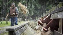 Don Richardson feeds his prize-winning breed stock. (John Lehmann/The Globe and Mail)