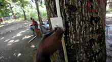 Jury-rigged power outlets such as this one hooked up to a tree in Jacmel, Haiti, are an example of how camp residents are creating their own solutions - sometimes illegal ones - to the chronic lack of power in the earthquake-ravaged city. (Deborah Baic/The Globe and Mail)
