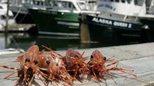 Spot prawns at Fisherman's Wharf in Vancouver. (Laura Leyshon/Laura Leyshon for The Globe and Mail)