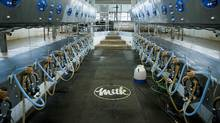 Automated milking machines, used to milk, measure, and record the amount of milk from each cow, are seen at the Mount Kolb dairy farm in Caledon, Ont. on Wednesday, Nov. 18, 2015. (James MacDonald/Bloomberg)