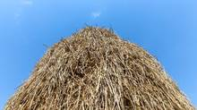 Consultant Rohit Bhargava details the 'Haystack Method' for curating trends. (FukurOwl/Getty Images/iStockphoto)