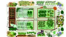 Niki Jabbour shares the layout of her fall and winter garden. (Anne Smith)