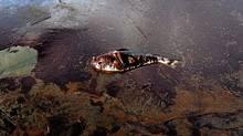 A dead fish coated in heavy oil floats near shore June 4, 2010 near East Grand Terre Island, Louisiana. (Win McNamee/Getty Images)