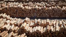 Logs waiting to be processed at Interfor's Acorn Division mill in Delta, B.C., on Sept. 14, 2012. (DARRYL DYCK For The Globe and Mail)