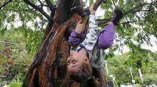 Six year old Maia Svenneby, who loves riding her bike and swimming in the lake, climbs one of her favourite trees in Kew Gardens in Toronto. (Fred Lum/Fred Lum/The Globe and Mail)
