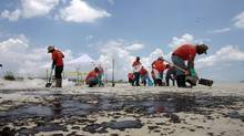 Cleanup workers hired by BP pick up oil on the beach in Gulf Shores, Ala. Shareholders have filed potential class actions against the oil company in Canada even though its shares don't trade in this country. (Dave Martin/AP)
