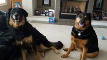 Two dogs, Kujo and Kaluah are among the lucky pets that were able to be taken by their owners when evacuated, but many animals were left behind. (Chas Coley For The Globe and Mail)