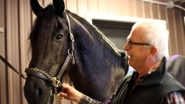 Williams Chocolate owner Willem Hellema with his horse, Morris. Mr. Hellema paid $20,000 for Morris after the young Friesian caught his eye at a judging in 2008. Although Mr. Hellema doesn't ride,his pleasure comes from seeing his black stallion in action, and he's philosophical about the $40,000 to $45,000 a year it takes to maintain a high-level show horse. (TRACY HANES)