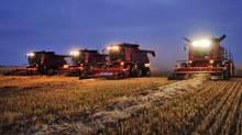 Combines harvest wheat on an Alberta farm on Sept. 26, 2011. (TODD KOROL/REUTERS)