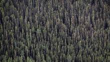 The boreal forest stands in this aerial photograph taken north of Fort McMurray, Alberta, Canada, on Wednesday, June 19, 2014. (Ben Nelms/Bloomberg)