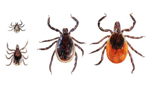 Tick dating fit lifestyle